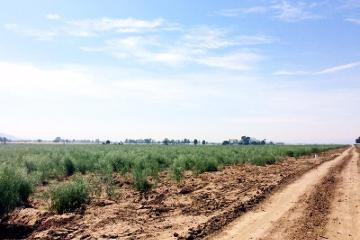 Foto principal de rancho en venta en pedro escobedo centro 2863375.