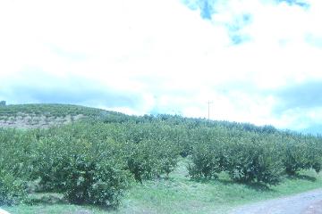 Foto de rancho en venta en  , san tadeo, calvillo, aguascalientes, 2245227 No. 01