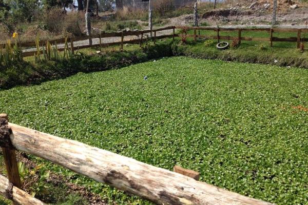 Foto de rancho en venta en pilcaya 0, pilcaya, pilcaya, guerrero, 2693114 No. 08