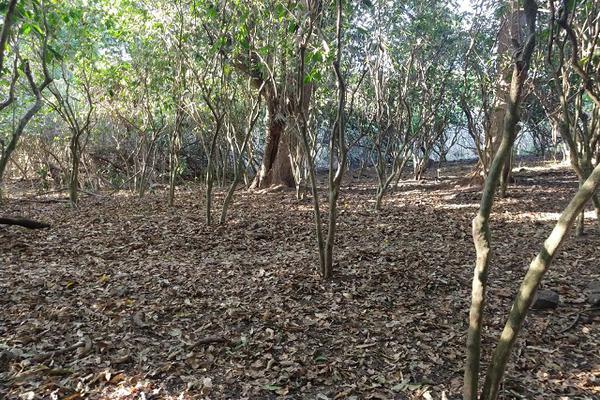 Foto de terreno habitacional en venta en 00 , el carrizal, villa de álvarez, colima, 20440312 No. 06