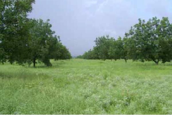 Foto de rancho en venta en carretera general cepeda / carretera zacatecas 1, derramadero, saltillo, coahuila de zaragoza, 3104590 No. 01