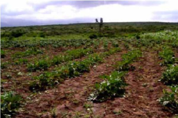 Foto de rancho en venta en carretera general cepeda / carretera zacatecas 1, derramadero, saltillo, coahuila de zaragoza, 3104590 No. 04