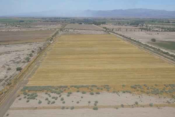 Foto de terreno habitacional en venta en  , 10 de mayo, mexicali, baja california, 12813455 No. 03