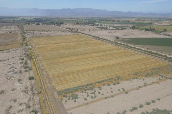 Foto de terreno habitacional en venta en  , 10 de mayo, mexicali, baja california, 12813455 No. 04