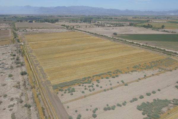 Foto de terreno habitacional en venta en  , 10 de mayo, mexicali, baja california, 12813455 No. 05