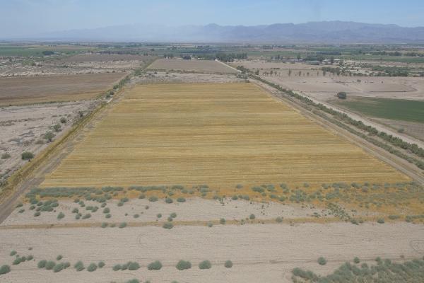 Foto de terreno habitacional en venta en  , 10 de mayo, mexicali, baja california, 12813455 No. 07