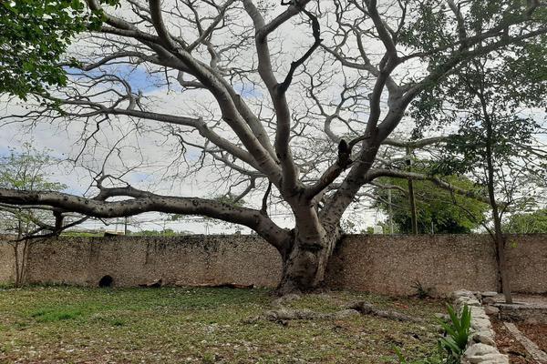 Foto de rancho en venta en 110 , hacienda mulsay, mérida, yucatán, 19647522 No. 21