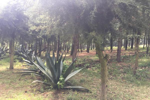 Foto de terreno habitacional en venta en 2da manzana 0, san lorenzo nenamicoyan, jilotepec, méxico, 5929930 No. 01