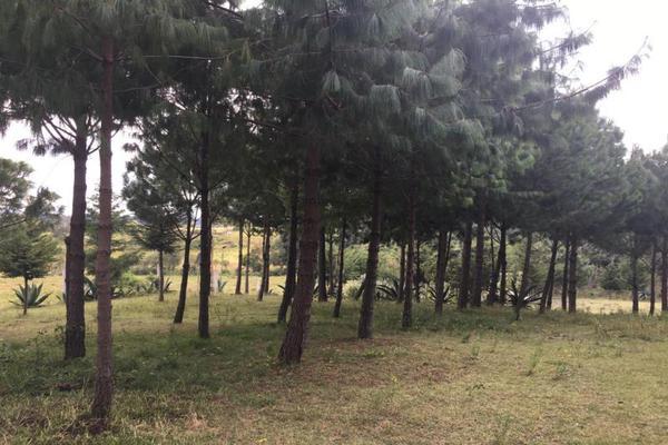 Foto de terreno habitacional en venta en 2da manzana 0, san lorenzo nenamicoyan, jilotepec, méxico, 5929930 No. 03