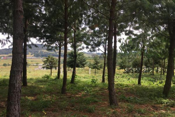 Foto de terreno habitacional en venta en 2da manzana 0, san lorenzo nenamicoyan, jilotepec, méxico, 5929930 No. 06