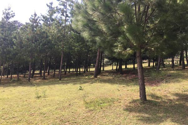 Foto de terreno habitacional en venta en 2da manzana , san lorenzo nenamicoyan, jilotepec, méxico, 5926366 No. 02