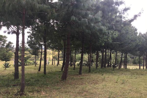 Foto de terreno habitacional en venta en 2da manzana , san lorenzo nenamicoyan, jilotepec, méxico, 5926366 No. 04