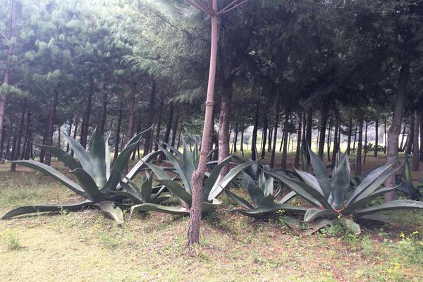 Foto de terreno habitacional en venta en 2da manzana , san lorenzo nenamicoyan, jilotepec, méxico, 5926366 No. 05