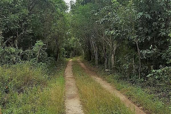 Foto de rancho en renta en 33 , sucila, sucilá, yucatán, 14027886 No. 05