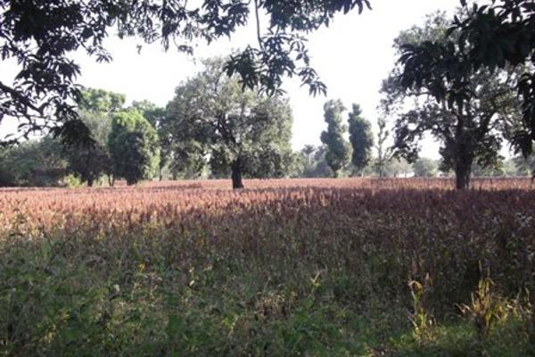 Foto de terreno comercial en venta en 5 de mayo , ixtlahuacan, yautepec, morelos, 6153365 No. 03