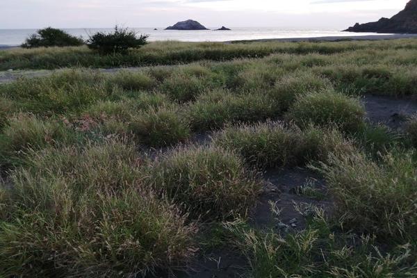 Foto de terreno habitacional en venta en 8 aquarium , villa florida, manzanillo, colima, 10186522 No. 17
