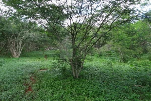 Foto de terreno comercial en venta en 99 , hocaba, hocabá, yucatán, 9184998 No. 08