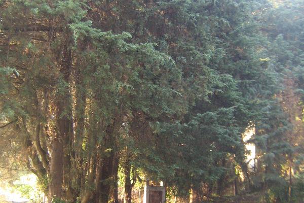 Foto de terreno habitacional en venta en  , agua bendita, huixquilucan, méxico, 3431287 No. 06