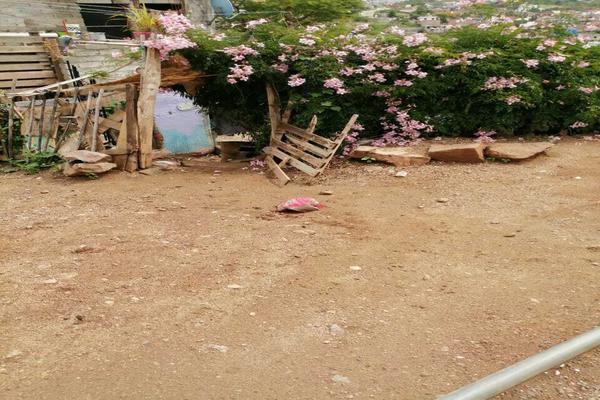 Foto de terreno habitacional en venta en  , águilas, guanajuato, guanajuato, 20254286 No. 04