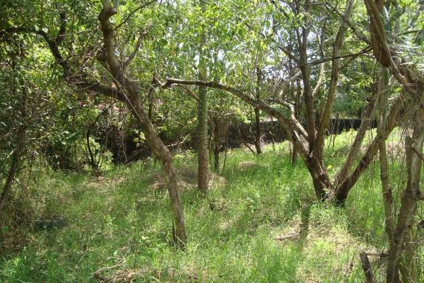 Foto de terreno habitacional en venta en ahuatepec 9, ahuatepec, cuernavaca, morelos, 5896657 No. 24