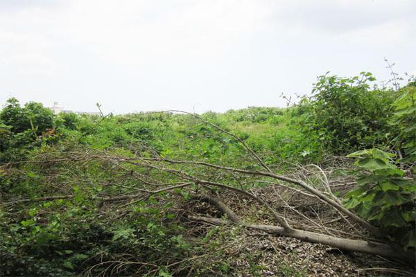 Foto de terreno habitacional en venta en  , ahuatlán tzompantle, cuernavaca, morelos, 21001859 No. 01