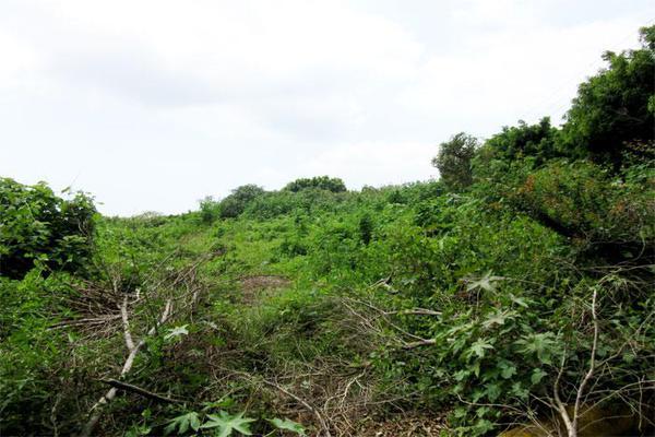 Foto de terreno habitacional en venta en  , ahuatlán tzompantle, cuernavaca, morelos, 21001859 No. 03