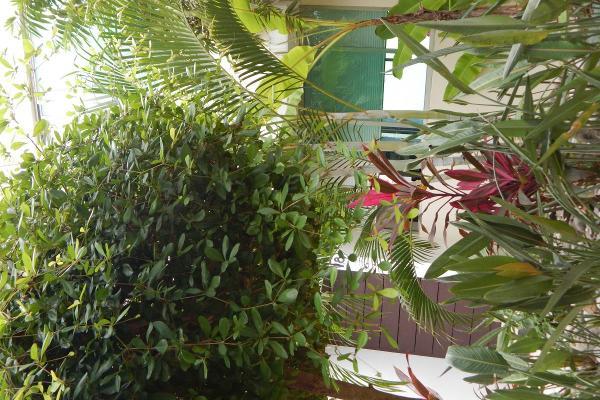 Foto de casa en venta en altozano , granja dorantes, centro, tabasco, 5339580 No. 09
