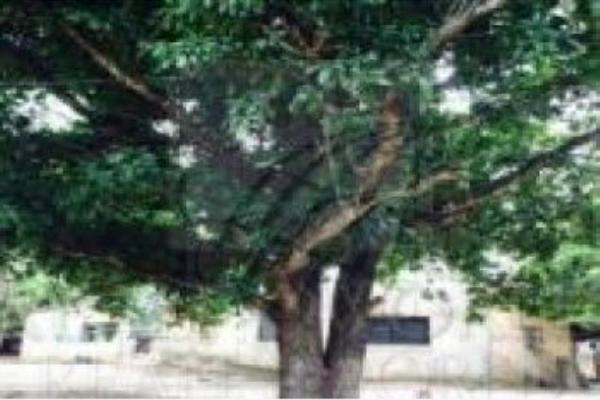 Foto de terreno habitacional en venta en  , arriaga centro, arriaga, chiapas, 5442507 No. 01