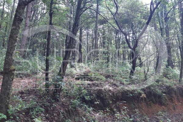 Foto de terreno habitacional en venta en  , atécuaro, morelia, michoacán de ocampo, 8844717 No. 07