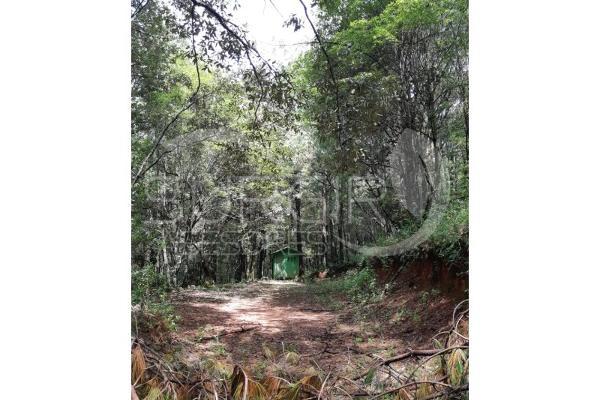 Foto de terreno habitacional en venta en  , atécuaro, morelia, michoacán de ocampo, 8844717 No. 09
