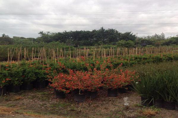 Foto de terreno habitacional en venta en  , atlacomulco, jiutepec, morelos, 7962393 No. 03