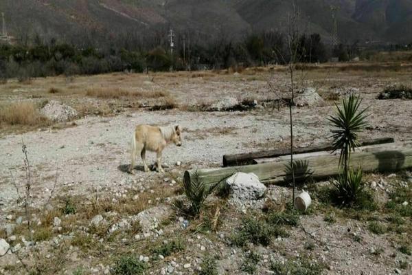 Foto de terreno industrial en venta en autopista saltillo-monterrey , santa maría, ramos arizpe, coahuila de zaragoza, 0 No. 13