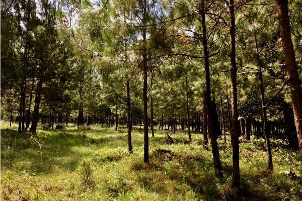 Foto de terreno habitacional en venta en  , avándaro, valle de bravo, méxico, 9304786 No. 06
