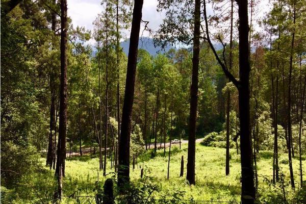 Foto de terreno habitacional en venta en  , avándaro, valle de bravo, méxico, 9304786 No. 07