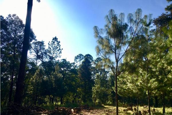 Foto de terreno habitacional en venta en  , avándaro, valle de bravo, méxico, 9304786 No. 09