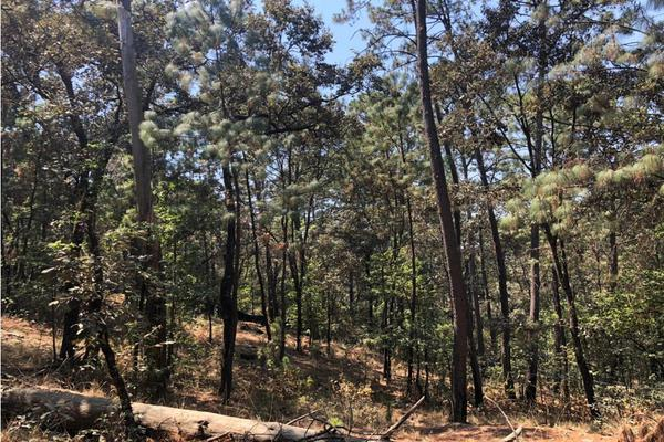 Foto de terreno habitacional en venta en  , avándaro, valle de bravo, méxico, 9304911 No. 05