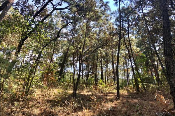 Foto de terreno habitacional en venta en  , avándaro, valle de bravo, méxico, 9304911 No. 06