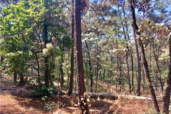 Foto de terreno habitacional en venta en  , avándaro, valle de bravo, méxico, 9304911 No. 07