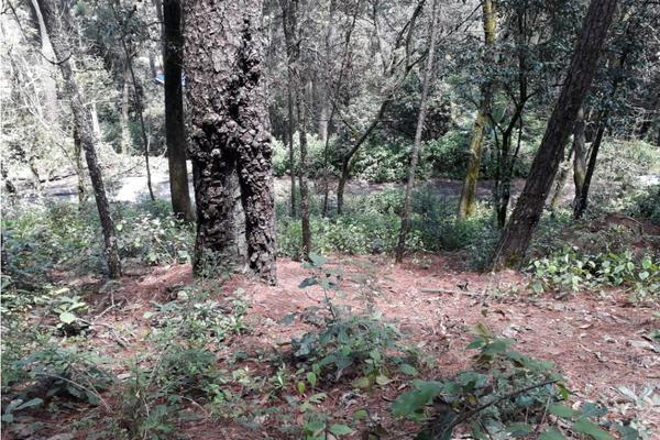 Foto de terreno habitacional en venta en  , avándaro, valle de bravo, méxico, 9305413 No. 06