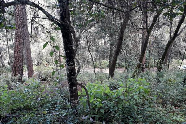 Foto de terreno habitacional en venta en  , avándaro, valle de bravo, méxico, 9305413 No. 09