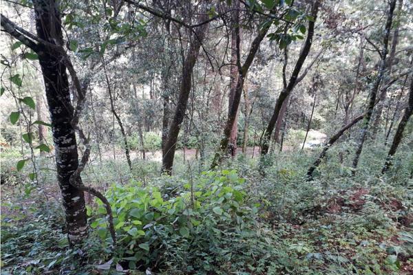 Foto de terreno habitacional en venta en  , avándaro, valle de bravo, méxico, 9305413 No. 10