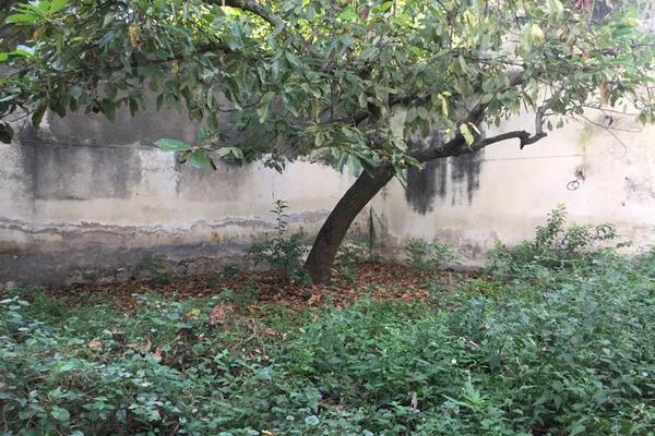 Foto de casa en renta en avenida hidalgo 1282, americana, guadalajara, jalisco, 0 No. 09