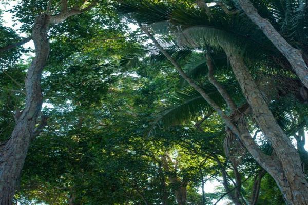 Foto de terreno habitacional en venta en avenida tercer mundo , san francisco, bahía de banderas, nayarit, 7262594 No. 06