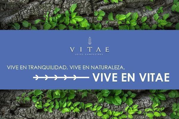 Foto de terreno habitacional en venta en  , baca, baca, yucatán, 14026070 No. 03