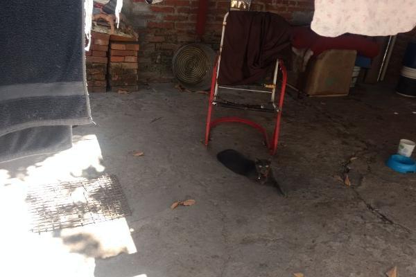 Foto de casa en venta en  , benito juárez, mazatlán, sinaloa, 6182750 No. 22