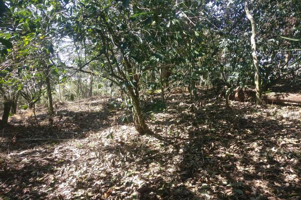Foto de terreno habitacional en venta en  , benito juárez, xalapa, veracruz de ignacio de la llave, 7482238 No. 03