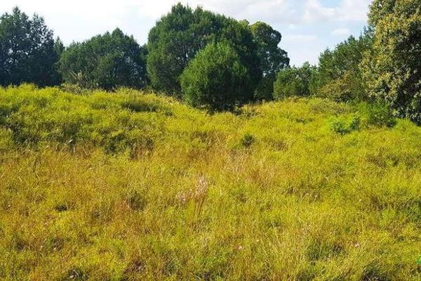 Foto de terreno habitacional en venta en  , la ranchería, progreso de obregón, hidalgo, 8063965 No. 03