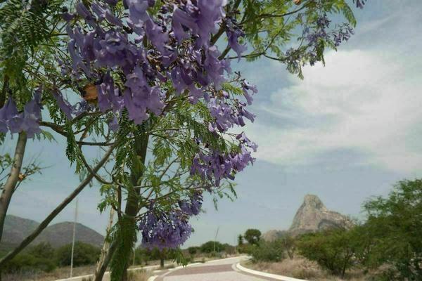 Foto de terreno habitacional en venta en  , bernal, ezequiel montes, querétaro, 20384633 No. 19