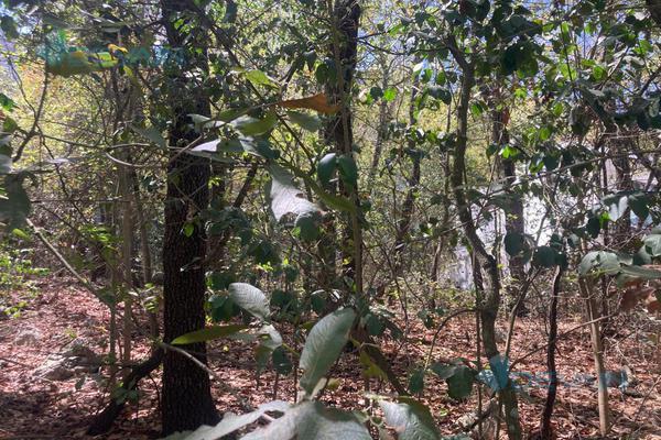 Foto de terreno habitacional en venta en  , bosques de san ángel sector palmillas, san pedro garza garcía, nuevo león, 0 No. 05