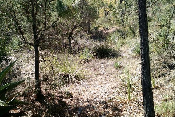 Foto de terreno habitacional en venta en  , bosques de santa catarina, santa catarina, nuevo león, 21283189 No. 03